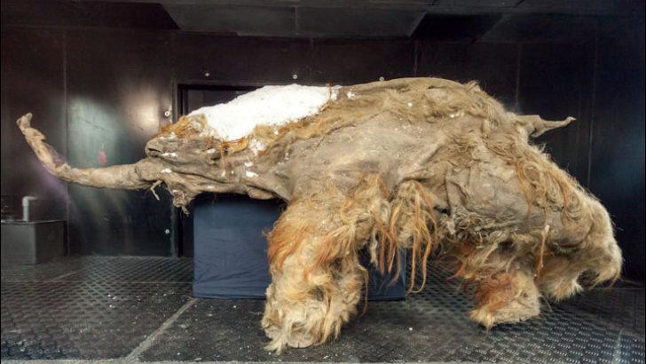 10 bin yıllık aslan kalıntıları bulundu