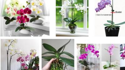 Evde Orkide Bakımı Nasıl Yapılır? Orkide Sulama ve Çoğaltma
